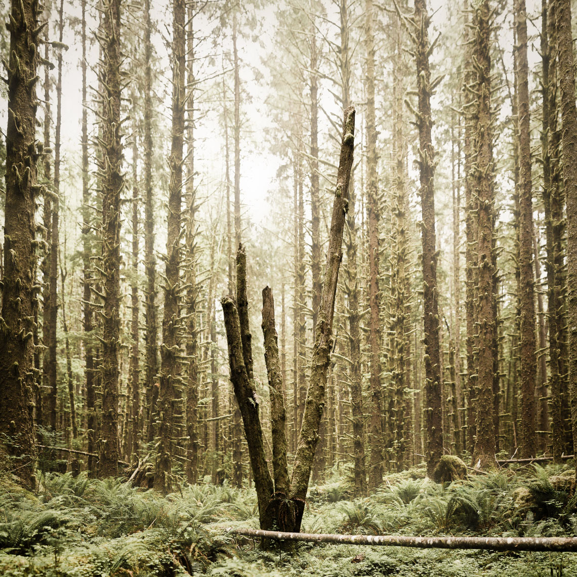 [Group 1]-20110709-PNW_2490_20110709-PNW_2534-45 images
